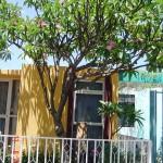 Árbol  Flor Mayo