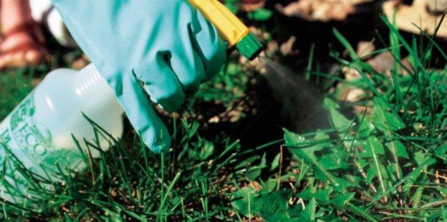 precauciones-con-los-herbicidas-para-cesped-portadilla